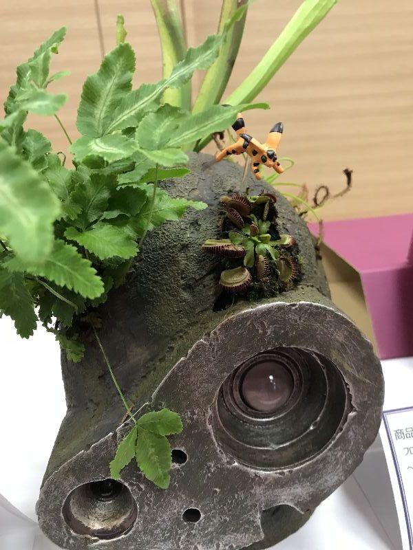 イオンネットショップの母の日にキモ可愛いプレゼント「天空の城ラピュタ」 食虫植物栽培キット