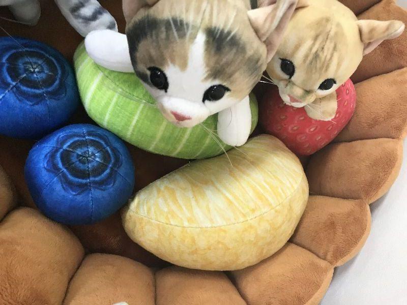 癒されネコ好きはフェリシモをチェックする!最新情報にゃ~♪